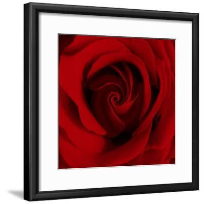Extreme Close-up of Red Rose-James Guilliam-Framed Photographic Print