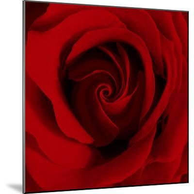 Extreme Close-up of Red Rose-James Guilliam-Mounted Photographic Print