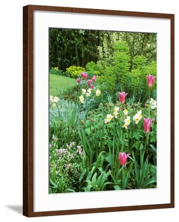 "Spring Border with Tulipa ""China Pink""-Zara Mccalmont (napier)-Framed Photographic Print"