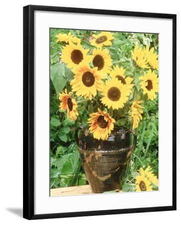 Helianthus (Sunflower) in Brown Glazed Jug, with Delphinium, on Table-Lynne Brotchie-Framed Photographic Print