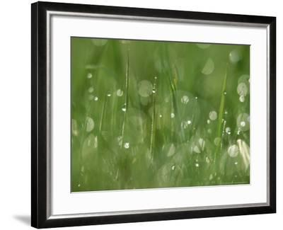 Water Droplets on Grass, Close-up Detail Yorkshire, UK-Mark Hamblin-Framed Photographic Print