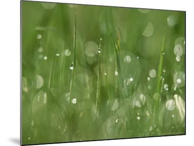 Water Droplets on Grass, Close-up Detail Yorkshire, UK-Mark Hamblin-Mounted Photographic Print