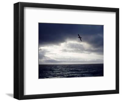 Southern Giant Petrel at Sea, Argentina-Mary Plage-Framed Photographic Print