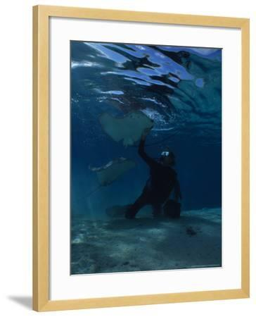 Hawai Sting Ray, with Diver, Polynesia-Gerard Soury-Framed Photographic Print