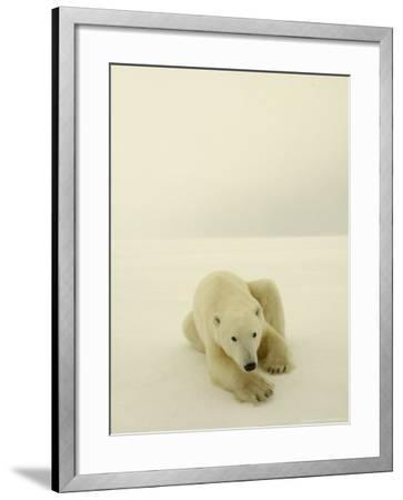 Polar Bear, a Male Wandering at Cape Churchill on the Shores of Hudson Bay, Near Churchill, Canada-Daniel J. Cox-Framed Photographic Print