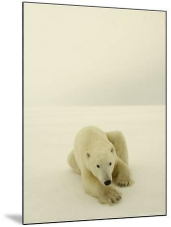 Polar Bear, a Male Wandering at Cape Churchill on the Shores of Hudson Bay, Near Churchill, Canada-Daniel J. Cox-Mounted Photographic Print