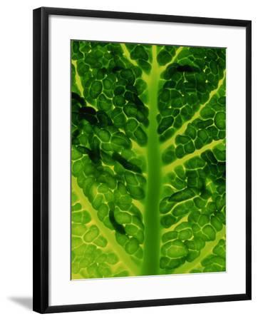Extreme Close-up of Brassica, Savoy Cabbage, November-James Guilliam-Framed Photographic Print