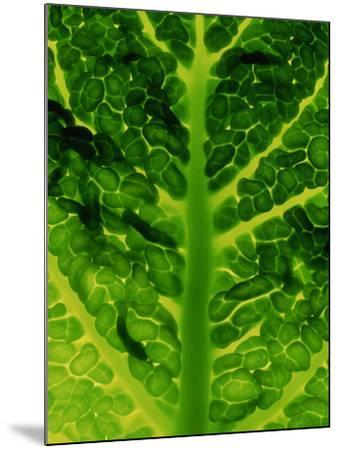 Extreme Close-up of Brassica, Savoy Cabbage, November-James Guilliam-Mounted Photographic Print