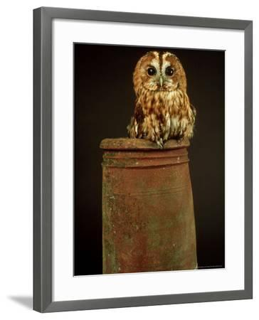 Tawny Owl, UK-Les Stocker-Framed Photographic Print
