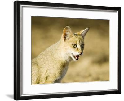 Indian Wild Cat, Ranthambhore, India-Mike Powles-Framed Photographic Print