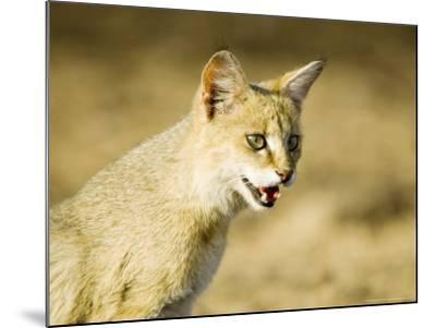 Indian Wild Cat, Ranthambhore, India-Mike Powles-Mounted Photographic Print