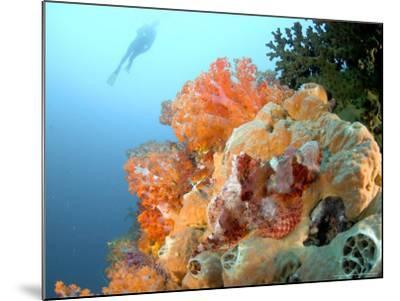 Bearded Scorpion Fish on Coral, Indonesia-Mark Webster-Mounted Photographic Print