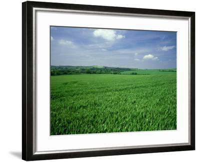 Wheat Field in Summer-Mike England-Framed Photographic Print