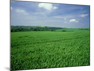 Wheat Field in Summer-Mike England-Mounted Photographic Print