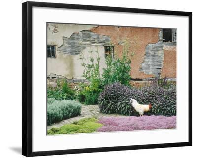 Formal Herb Garden Thyme-Jacqui Hurst-Framed Photographic Print