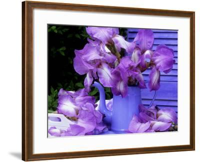 """Bearded Iris """"Blue Shimmer"""" in Blue Coffee Jug on Table with Blue Shutter in Background-James Guilliam-Framed Photographic Print"""