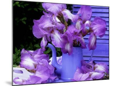 """Bearded Iris """"Blue Shimmer"""" in Blue Coffee Jug on Table with Blue Shutter in Background-James Guilliam-Mounted Photographic Print"""
