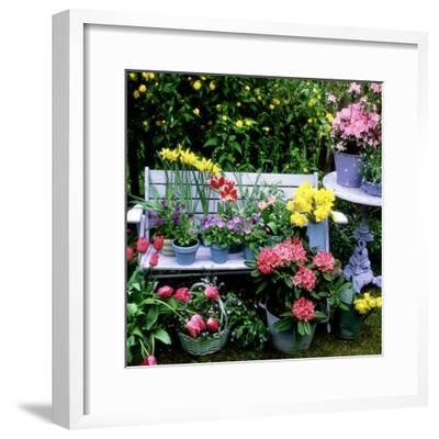 Violet, Bellflower,Tulip, Daffodil, Forget Me Not, and Azalea-Lynne Brotchie-Framed Photographic Print