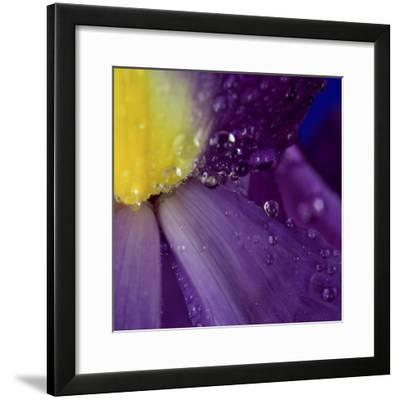 Extreme Close-up of Water Droplets on Blue Iris Flower-James Guilliam-Framed Photographic Print