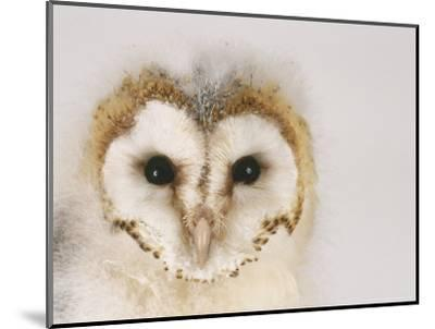 Barn Owl, Portrait of Face-Les Stocker-Mounted Photographic Print