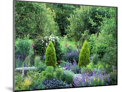 View into Country Garden with Perennials and Small Trees Summer-Lynn Keddie-Mounted Photographic Print