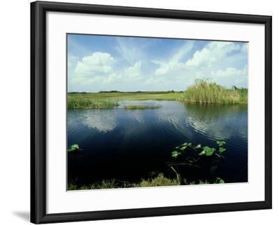 Everglades, Florida-David Tipling-Framed Photographic Print
