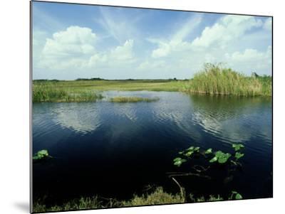 Everglades, Florida-David Tipling-Mounted Photographic Print