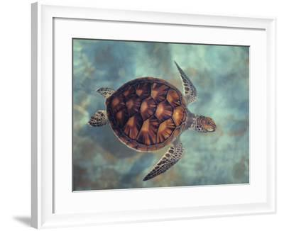 Green Turtle, Java, Indian Ocean-Gerard Soury-Framed Photographic Print