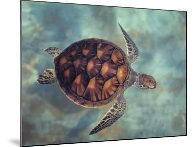 Green Turtle, Java, Indian Ocean-Gerard Soury-Mounted Photographic Print