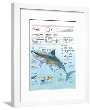 Infographic of Habitat, Anatomy, Teeth and Movement of the White Shark and Attack Data on Humans--Framed Poster