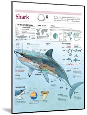 Infographic of Habitat, Anatomy, Teeth and Movement of the White Shark and Attack Data on Humans--Mounted Poster