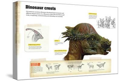Infographic That Describe Different Types of Dinosaur Crests That Were Used to Communicate--Stretched Canvas Print