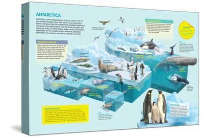 Infographic That Shows the Fauna That Lives in the Coldest Place in the Planet, Antarctica--Stretched Canvas Print