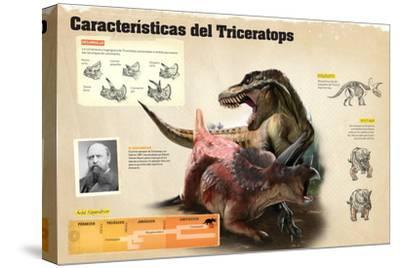 Infografía Sobre Algunas De Las Características Del Triceratops--Stretched Canvas Print