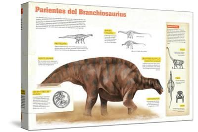 Infografía Sobre Los Diplodocoideos, Durante El Período Jurásico, En El Mesozoico--Stretched Canvas Print