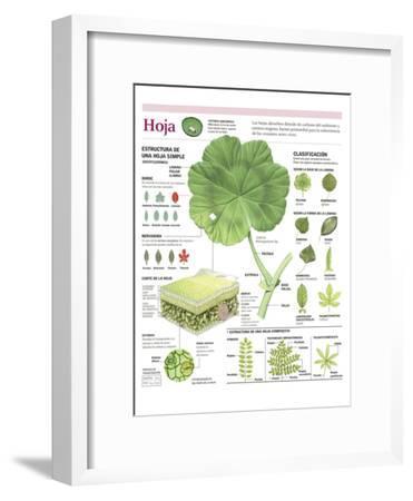 Infografía De Las Partes De La Hoja, Clasificación E Intercambio De Gases Con La Atmósfera--Framed Poster