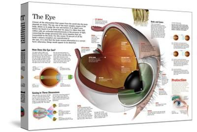 Infographic of the Parts of the Human Eye, their Function and the Most Common Eye Defects--Stretched Canvas Print