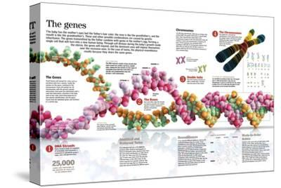 Infographic of the Structure of Dna and the Mechanism of Genetic Inheritance in People--Stretched Canvas Print