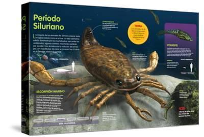 Infografía De Los Animales Del Fondo Oceánico En El Período Silúrico (Hace --Stretched Canvas Print