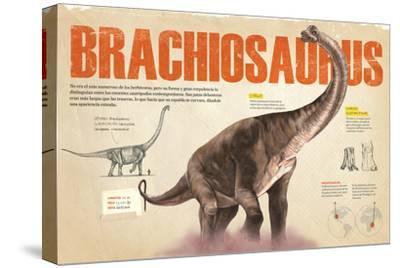 Infografía Del Brachiosaurus Y Las Zonas Donde Se Hallaron Fósiles De Este --Stretched Canvas Print