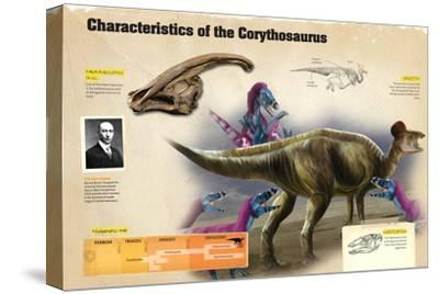 Infographic of the Corythosaurus, a Dinosaur from the Cretaceous Period--Stretched Canvas Print