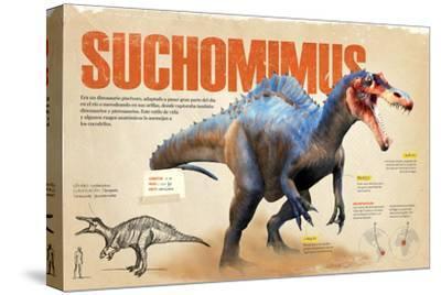 Infografía Sobre El Suchomimus, Dinosaurio Piscívoro Del Cretácico, Era Mesozoica--Stretched Canvas Print