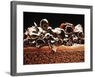 Sponge Cake with Chocolate Cream--Framed Photographic Print