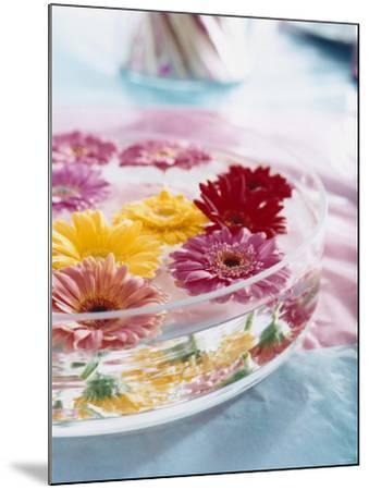 A Bowl of Flowers Floating in Water (Table Decoration)-Alexander Van Berge-Mounted Photographic Print