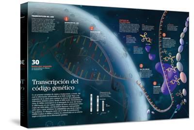 Infografía Que Muestra El Proceso De Transcripción Del Adn Del Núcleo Celular a Las Organelas--Stretched Canvas Print
