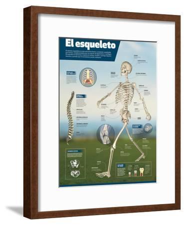 Infografía Del Esqueleto Humano, Detalle De Los Principales Huesos Y Diferencias Entre Sexos--Framed Poster