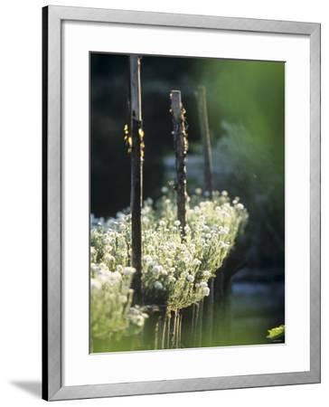 White Camomile in Garden-Joerg Lehmann-Framed Photographic Print