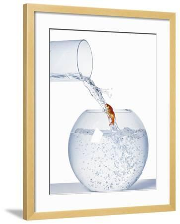 Goldfish Trying to Swim up a Stream of Water--Framed Photographic Print