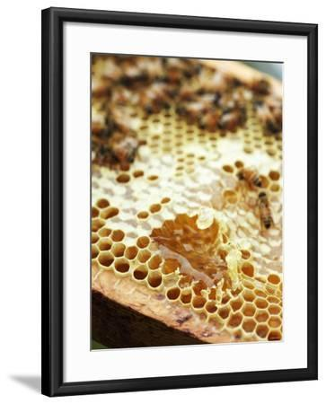 A Honeycomb with Bees-Matilda Lindeblad-Framed Photographic Print