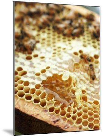 A Honeycomb with Bees-Matilda Lindeblad-Mounted Photographic Print